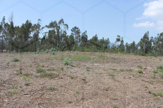 Terreno com aptidão construtiva